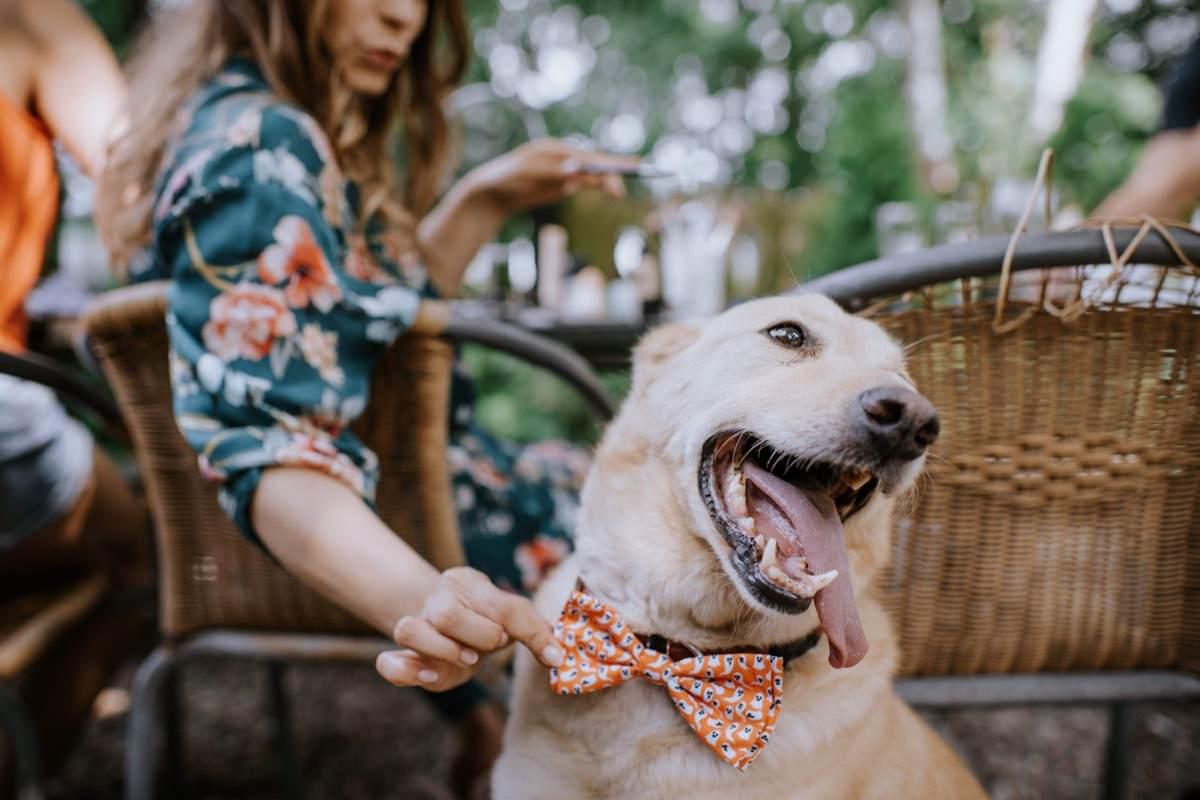 pies na ślubie, mucha dla psa