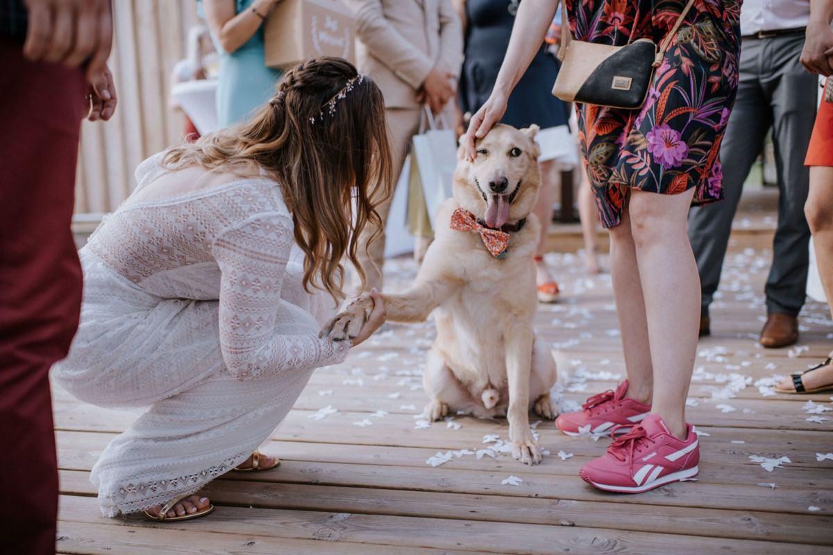 pies na ślubie, zwierzęta na weselu