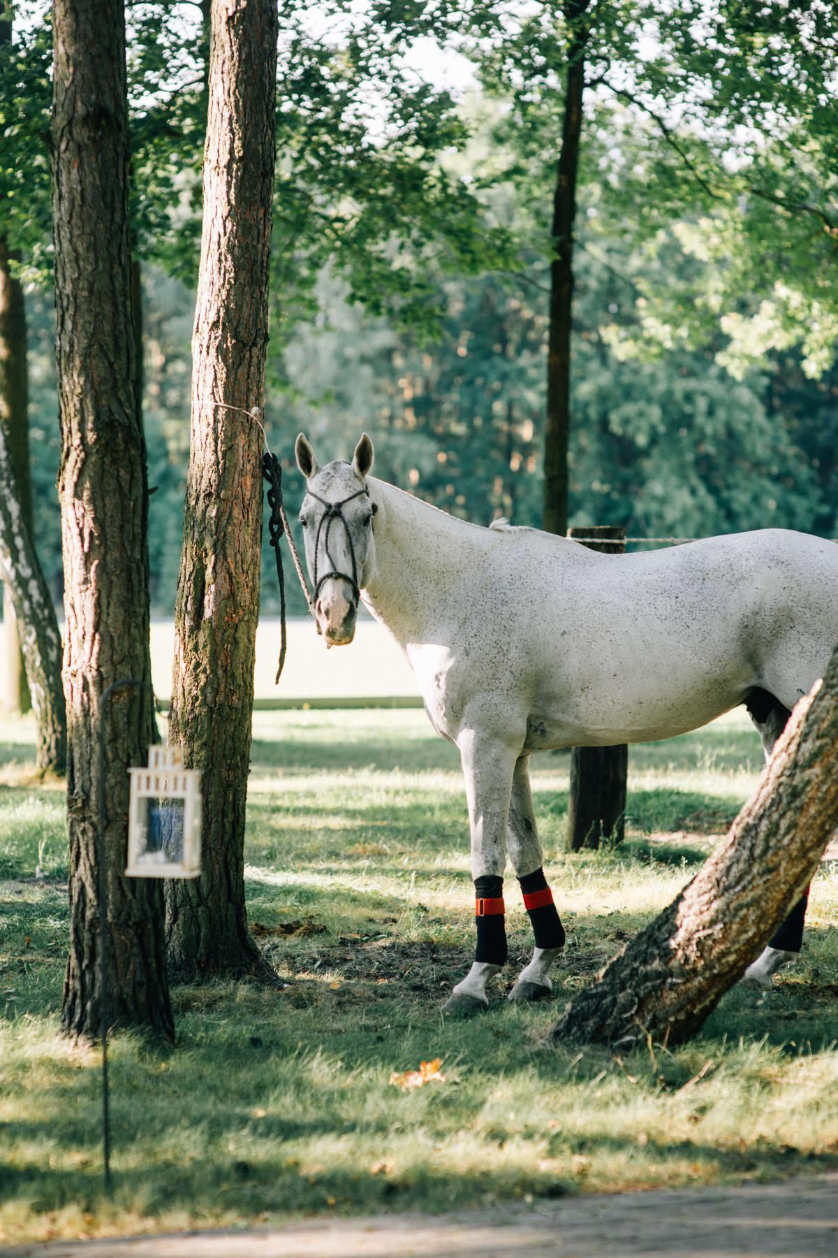 eleganckie wesele w stadninie koni Warsaw Polo Club